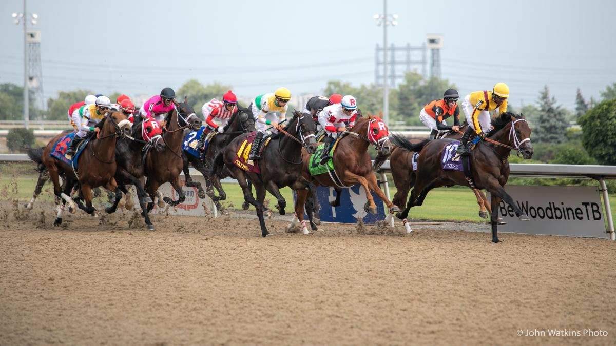 horse racing betting vouchers for spaying